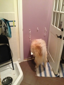 Sammy and the Dog Door
