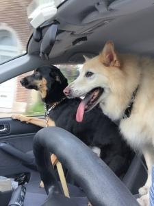 Sammy Driving