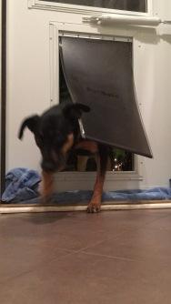 Dog door M