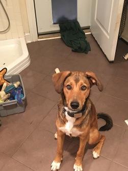 Dog Door T