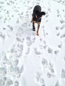 New Mexico Snow M