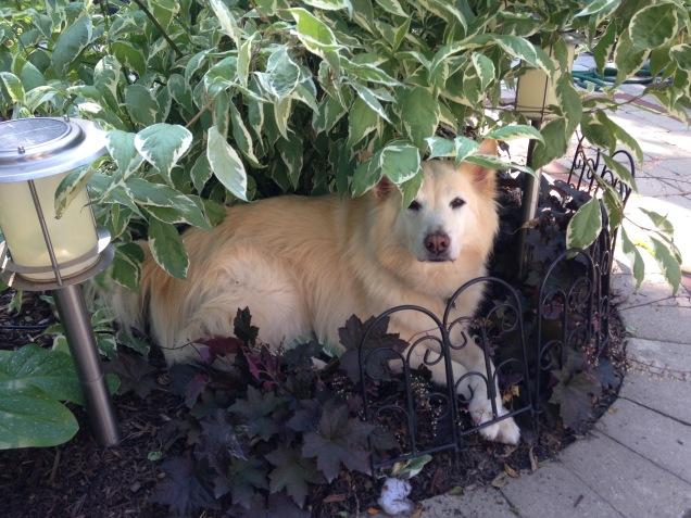 Under the dogwood S