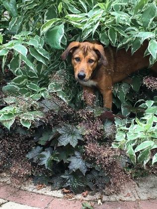 Under the Dogwood T