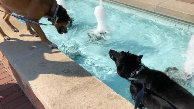 Zoe in the Fountain